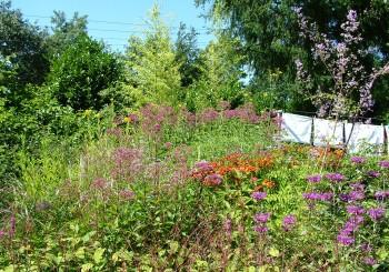 Help de bij, zaai een bloemenveld