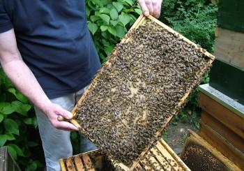 Buckfast Bijen Aktie